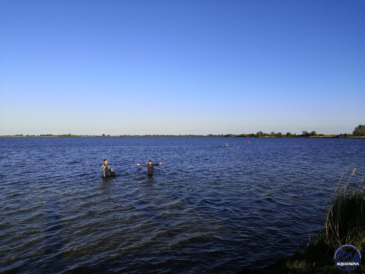 Aquafauna bikkels te water in Reeuwijk